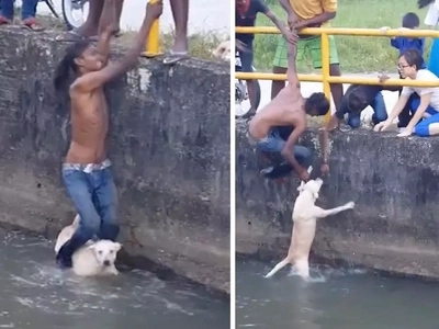 Dramatic footage of a man rescuing drowning puppy from canal using only his legs wins many hearts