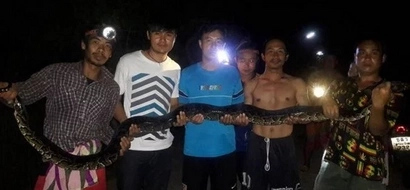 It Took 8 Men To Restrain This Killer Python