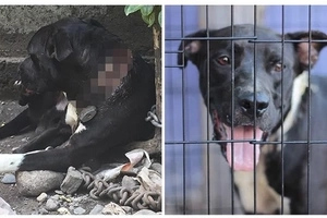 El hermoso rescate de un perrito encadenado, no creerás cómo luce ahora