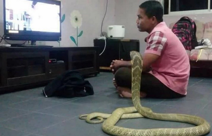 Man Marries His Pet Snake Because He Believes It Is His Reincarnated Girlfriend