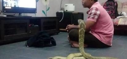Man Marries His Pet Snake Because He Believes It Is His Reincarnated Girlfriend