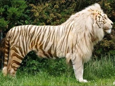 Impactantes imágenes de animales híbridos que jamás habías visto