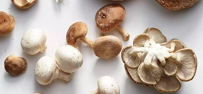 Earn your first million on mushroom farming in Kenya