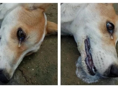 A dog saved its master's home from being robbed by thieves. Later on, it was shedding tears due to this heartbreaking reason!