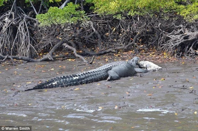Tragedy as crocodiles gulps more than 15 people