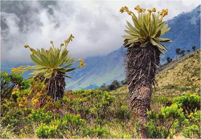 La mitad de los ecosistemas colombianos podrían desaparecer