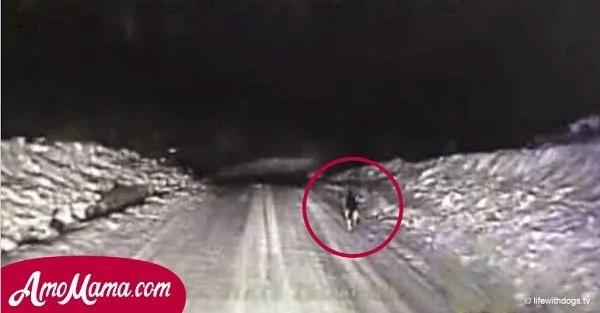 Un perro corrió a la carretera en la noche y no permitió que la patrulla de policía siguiera su camino hasta que la siguieran
