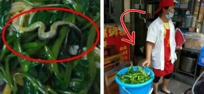 Woman Flushes Her Dinner Down the Toilet. Why? She discovered a snake hiding among noodles!