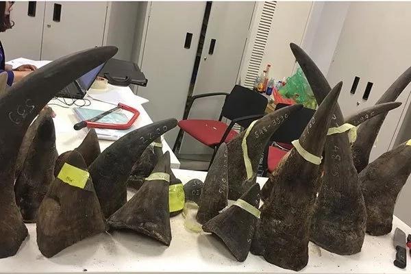 Custom officials intercept over 100 kg of rhino horns worth Ksh 600 million smuggled from Kenya