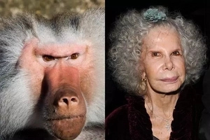 ¿A cuál animal te pareces más?