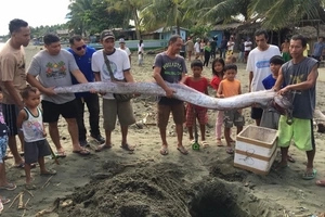10-foot-long dead oarfish captured in Agusan del Norte two days before raging earthquake in Surigao
