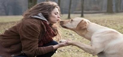 El perro perfecto para ti, según tu signo zodiacal