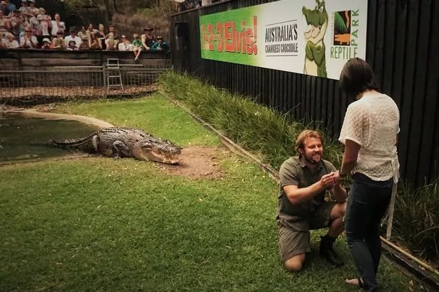 The brave moment Collett proposed as the crocodile looked on. Photo: Australia Reptile Park