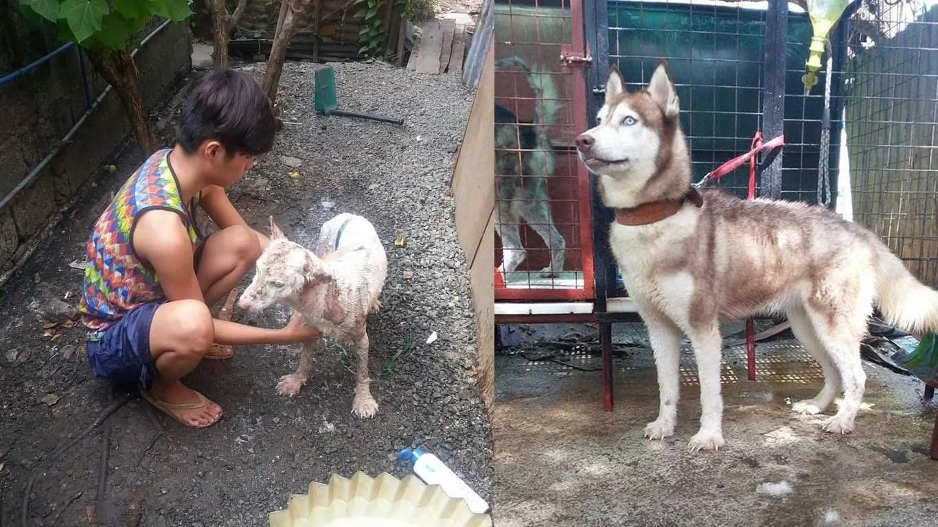 dog-transformation