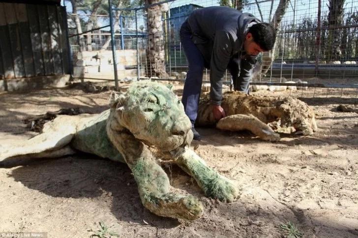 ¡El peor zoológico del mundo!, habitado hasta por animales muertos