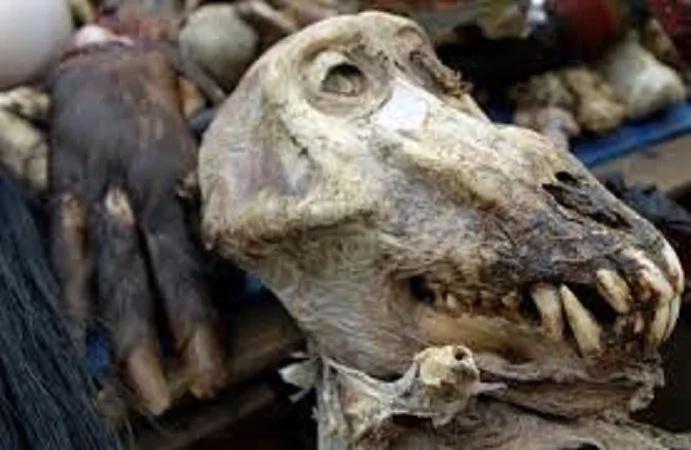Siri 'CHAFU' ya wanasiasa wa ODM yafichuka; pata uhondo kamili