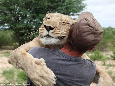 Abandoned lion cub who became best friends with man: First seen leaping onto him with 'grateful hug