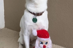 Dog Obsessed With His Stuffed Santa Toy Is Taken To See The Real One, And His Reaction Is Priceless