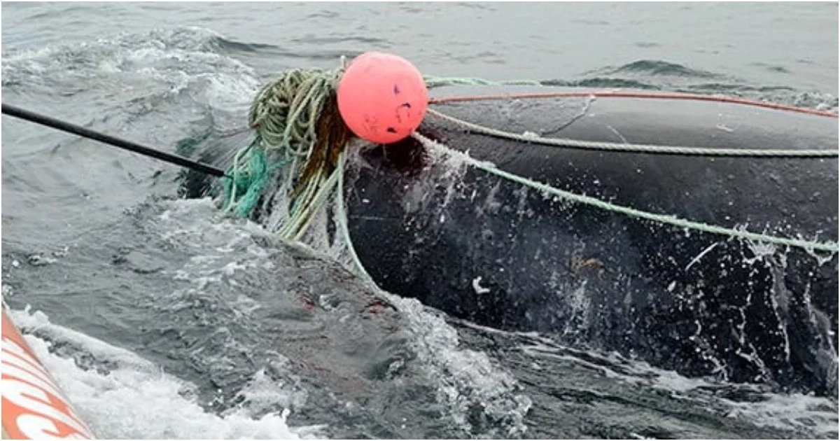 Fisherman killed by whale moments after rescuing it from net