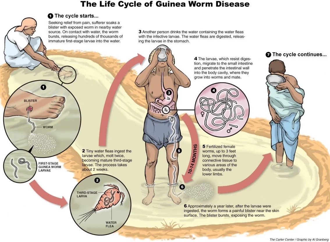 Govt's KSh 100K offer for Guinea worm almost ending