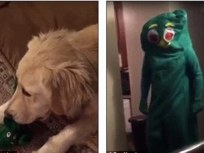 Dog Is Amazed When Owner Dresses Like His Favorite Chewtoy