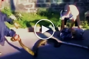 Watch these brave Pinoys try to capture an aggressive giant snake to protect their neighborhood!