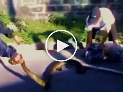 Brave Pinoys try to catch aggressive giant snake to protect their neighborhood