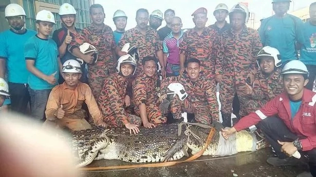 Fourteen fire crew officers rescued a 20 ft long crocodile during a 10-hour operation. But as it went out, all rescuers' efforts were in vain