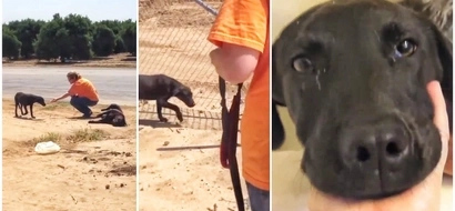 VIRAL VIDEO of a Pup's Amazing & Inspiring Transformation