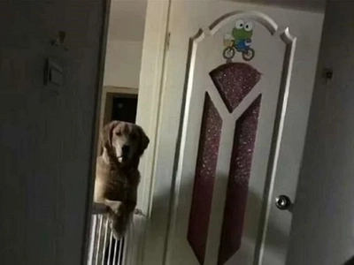 The reason why this dog looks out for his owner before he sleeps will make you cry a river