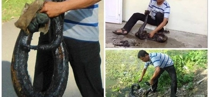 Man finds PYTHON trapped in drum of thick tar, takes it home and cleans it up to save its life (photos, video)