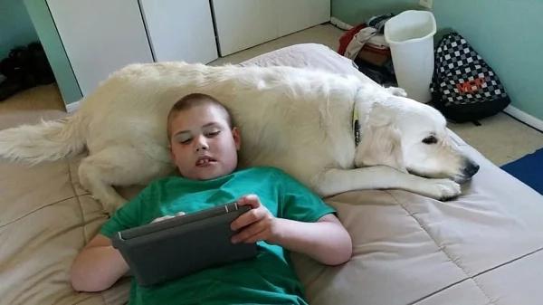 Perro de servicio ayudó a niño autista: Esta conmovedora historia demuestra lo realmente increíbles que son los perros