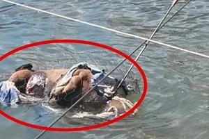 ¡Qué siniestro! A un perro le lanzaron una flecha, lo envolvieron en alambre y lo tiraron a un río