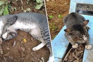 Este gato desconsolado vivió al lado de la tumba de su dueño por un año