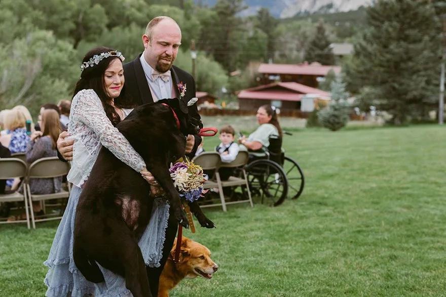 Labrador agonizante de 15 años sobrevive para asistir a la boda de su dueña: emotivas imágenes