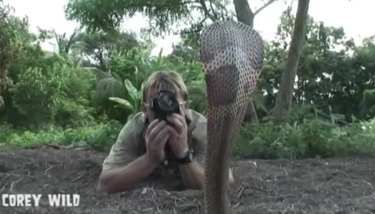Watch This Scary Venom-Spitting Cobra Attack!