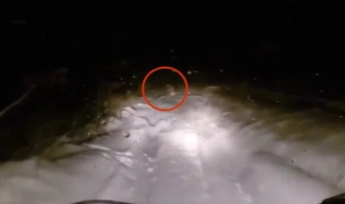 Russians Were On The Night Road, When Suddenly BIG FOOT Appeared In Front Of Them