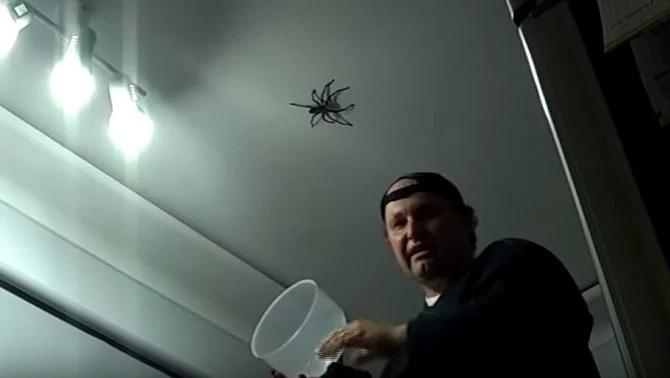 spider-attack