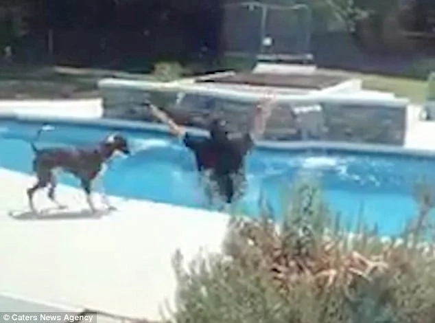 Another girl? Father-of-4 throws himself into pool after his wife breaks news of their fifth baby girl