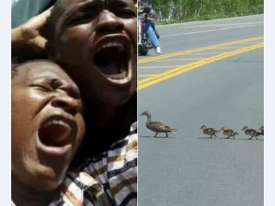 Gripping video of family of ducks crossing the highway will make your heart stop!