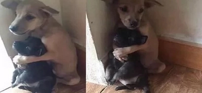 LOOK: Cute PUPPY hugs his friend tight after they were abandoned by their owners!
