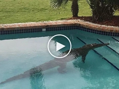 Bahala ka na diyan! Scared man abandons girlfriend as deadly crocodile attacks them in swimming pool