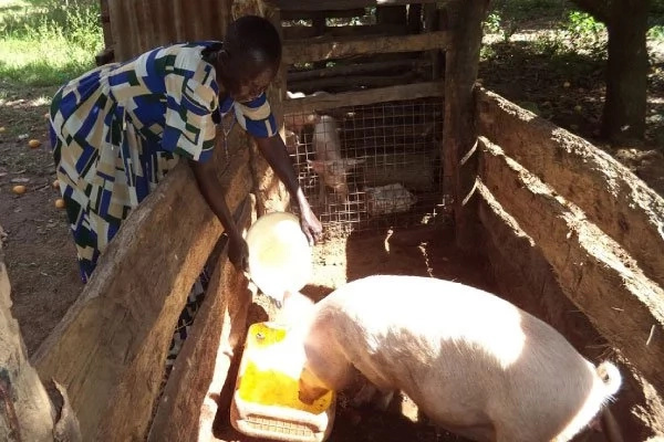 Enlivening! Meet 68-year-old widow who is raking millions through farming