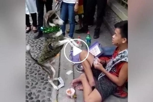 Pinoy kid and talented dog amaze passers by with their mini show outside UST campus