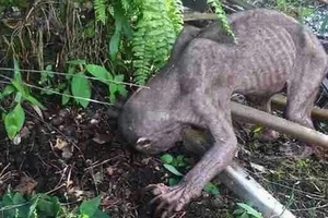 LOOK! These villagers thought this creature was an alien; the truth will melt your heart