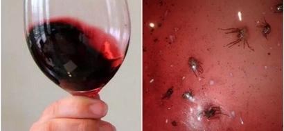 Compró una caja de vino, minutos después se llevó la sorpresa más grande de su vida