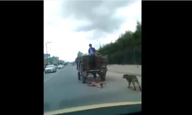 ¡Indignante! Este hombre arrastró a su perro varias cuadras