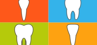 Different Types of Teeth and Their Functions