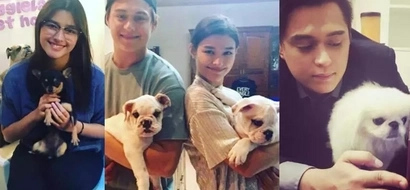 Pareho silang dog lovers! Liza Soberano and Enrique Gil both have a heart of gold for puppies