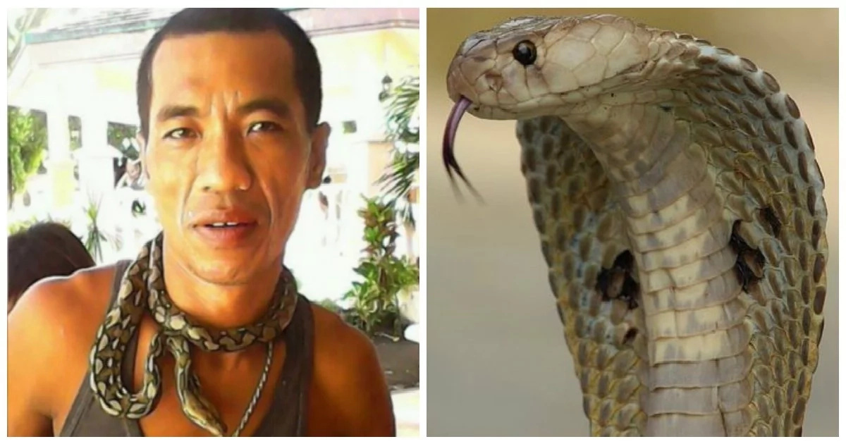 'Cobra King' from Sorsogon ironically dies from the bite of his own pet snake